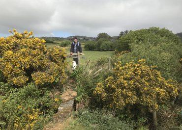 These weeks by Myrddin ap Dafydd